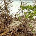Drift Roots by Robert Brice
