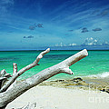 Drift Wood In The Caribbean by Robyn Saunders