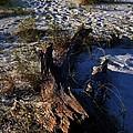 Drift Wood by Judy Wolinsky