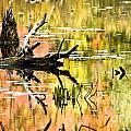 Drift Wood Reflections by Cheryl Baxter