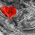 Drifting - Love Merging by Gill Billington