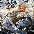 Driftwood Abstract by Barbara Griffin