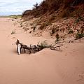 Driftwood Along Dalvay Shore by Trever Miller