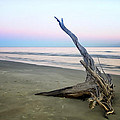Driftwood At Dusk by Phill Doherty