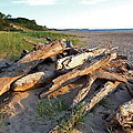 Driftwood At Sunset by Susan Wyman