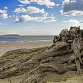 Driftwood   by David Stone