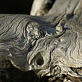 Driftwood by Evelyn Hill
