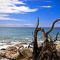 Driftwood Island by Karen Wiles