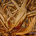 Driftwood Jungle Botany Bay by Carrie Cranwill