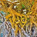 Queen Mariana's Driftwood by Mark J Dunn