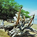Driftwood On A Maui Beach by Marcus Dagan