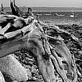 Driftwood On Rocky Beach by Jemmy Archer