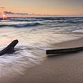 Driftwood On The Beach by Adam Romanowicz
