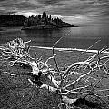 Driftwood On The Shore Near Wawa Ontario Canada by Randall Nyhof
