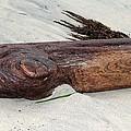 Driftwood by Robert Butler