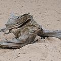 Driftwood by Scott Angus