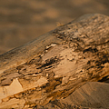 Driftwood by Sebastian Musial