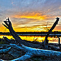 Driftwood Sunset by Brian Metz