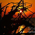 Driftwood Tangle by Marty Fancy