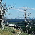 Gnarled Trees And Divide Mountain by Tracey Vivar