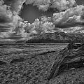 Driftwood V4 by Douglas Barnard