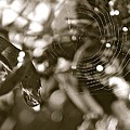 Drip And Web by Gretchen  Smith