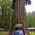 Drive Through Redwood Tree by Jeff Black
