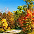 Driving Through Autumn by Steve Harrington