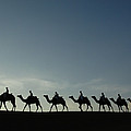 Dromedary Camels In Thar Desert by Pete Oxford