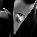 Droplet by Shane Holsclaw