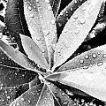 Droplets by Alexander Graybar