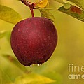 Droplets From A Red Apple   by Jeff Swan