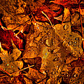 Droplets Of Autumn by David Patterson