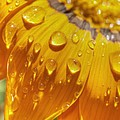 Droplets Of Gold by Chris Fleming