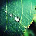 Drops Of Joy by Zinvolle Art