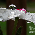 Drops Of Life by Douglas Stucky