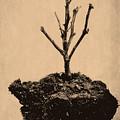 Drought by Bob Orsillo