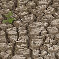 Dry Cracked Mud  by Eyal Bartov