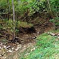 Dry Creek Bed by Matt Johnson