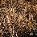 Dry Grass by Tim Hester