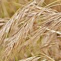 Dry Grass... by Werner Lehmann