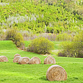 Dry Hay Bales In Spring Farm Field Maine by Keith Webber Jr