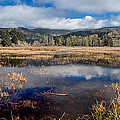 Dry Lagoon In Winter Panorama by Greg Nyquist