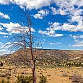 Dry Landscape by Jess Kraft