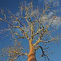 dry season in Madagascar by Rudi Prott