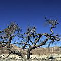 Dry Solitary Tree  by Efi Bar