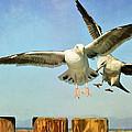 Dual Landing by Fraida Gutovich