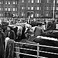 Dublin Cattle Market 1959 by Irish Photo Archive