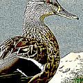 Duck Art Tribal Mallard by Lesa Fine