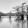 Duck Blind On Caddo Lake by Mary Lee Dereske